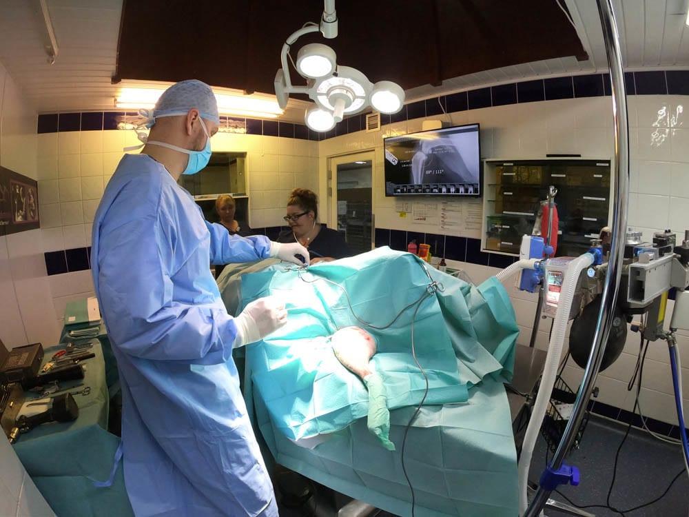 Cranial Cruciate Ligament Rupture